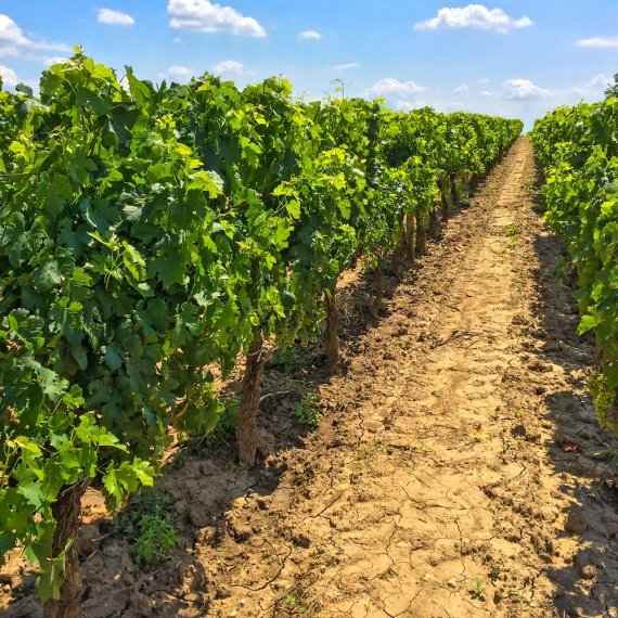 Saint-Emilion Wine Tour - Full-Day