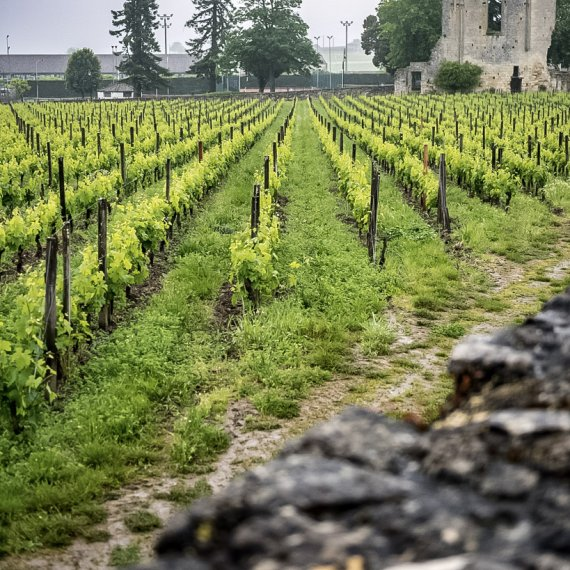Saint-Emilion Wine Lovers (morning)